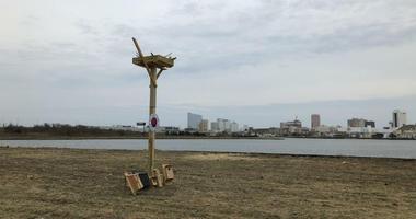 Atlantic City Ospey