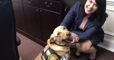 Charlie the electronics sniffing dog, posing with Delaware County District Attorney Kat Copeland.