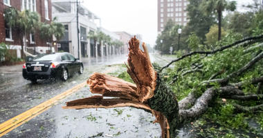A car rives around a fallen tree branch on Calhoun St on September 4, 2019 in Charleston, South Carolina. Hurricane Dorian is just off coast of South Carolina.