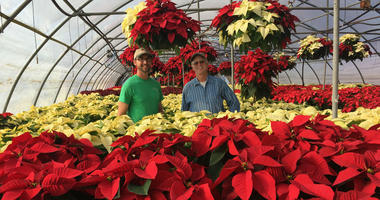 Dave Glick, right, owner of Glick's Greenhouse in Oley, Berks County, stands with his nephew, Joe Glick, in one of the greenhouses where he grows poinsettias.