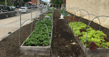 The Pennsylvania Farm Bill that Gov. Tom Wolf signed this week includes funding, for the first time, to support urban agriculture, which is booming in Philadelphia.