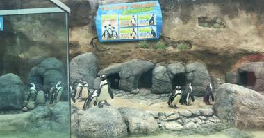 Adventure Aquarium Penguin Exhibit