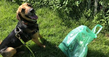 Seger Park Dog Owners Association is promoting puppy plogging.