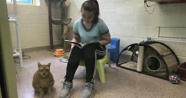 A student reads out loud to a non-judgmental audience — cats.