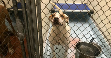 Following an outbreak of a deadly canine upper respiratory virus, Philadelphia's only open intake animal shelter is fully operational again after being closed for three weeks.