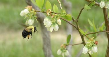It's National Pollinator week, a time to focus on the creatures that do some heavy lifting - helping plants reproduce. They're in trouble and need our help.