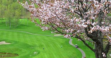 Fancy a round of golf under the cherry blossoms? One of the two courses at Niseko Village was designed by Arnold Palmer and has rows of sakura trees along fairways and at the clubhouse entrance.