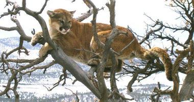 Trail runner suffocates, kills mountain lion in self defense