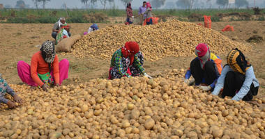 """PepsiCo says the farmers were """"illegally"""" growing its registered variety of potatoes."""