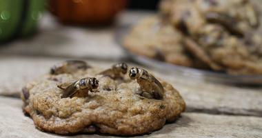 Crickets baked into cookies.