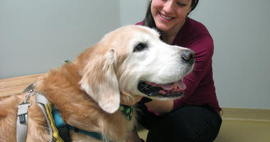 In this March 15, 2019, photo Dr. Lindsey Bullen pets Benko, a golden retriever with weight issues, during a visit at the Veterinary Specialty Hospital in Cary, N.C.