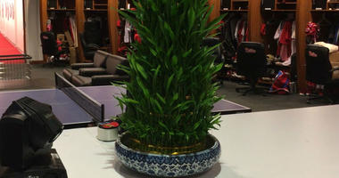 Brad Millers bamboo in the Phillies clubhouse