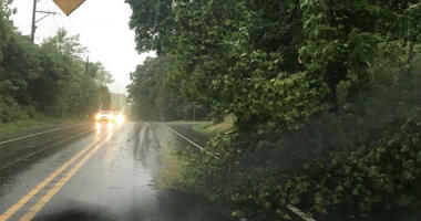 Trees fall as severe weather passes through.