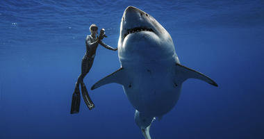 Ocean Ramsey, a shark researcher and advocate, swims with a large great white shark off the shore of Oahu.