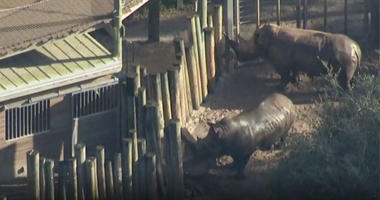 Toddler rushed to hospital after rhino encounter at Florida zoo