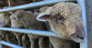 A major upgrade is in the works, for a dilapidated sheep barn at Saul High School in Roxborough