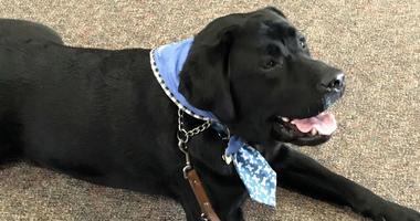 Preston, a therapy dog, provides comfort in Michigan.