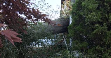 This tree slammed into the back of a house on Diane Ave in Horsham. Officials say one person was hurt and taken to the hospital.