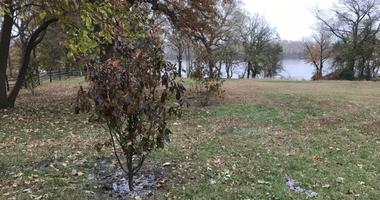 """The DAR, or Daughters of the American Revolution — along with USA250 and the Pennsylvania Horticultural Society — donated 250 trees to create the """"DAR Pathway of the Patriots"""" along the Schuylkill River, honoring patriots of the American Revolution."""