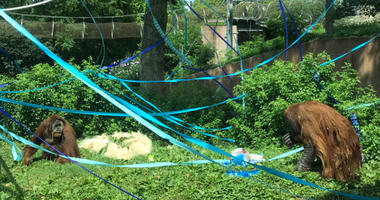 PECO Primate Reserve party