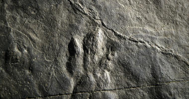 In this Feb. 28, 2019 photo, fossilized dinosaur footprints are shown on a paving stone at the Valley Forge National Historical Park in Valley Forge, Pa.