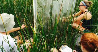 Adam Langley, a Villanova biologist, and a group of students team up with Smithsonian researchers to measure plants and roots in marsh areas along the East Coast to determine the impact of carbon dioxide on growth.