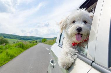 Tesla Just Launched 'Dog Mode' to Keep Your Pooch Cool