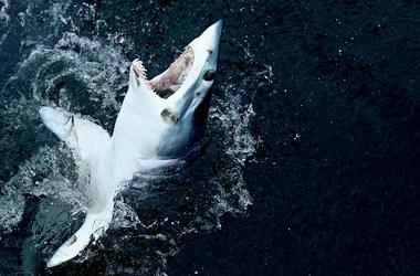Shark bites surfer