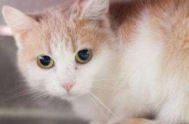 SPCA Serving Erie County | Star 102 5