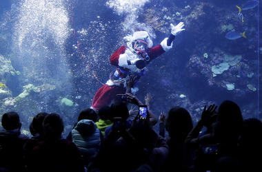 Volunteer diver George Bell, dressed as Santa Claus, waves to visitors to the Philippine Coral Reef tank at The California Academy of Sciences in San Francisco, Thursday, Dec. 13, 2018. The California Academy of Sciences launched its holiday festivities T