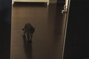Jeff Ghost Cat