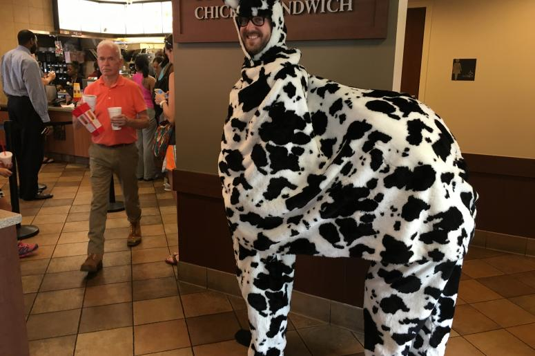 Producer David is a Cow