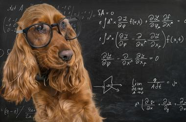 Dog Genius