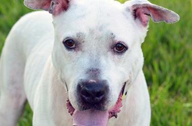 Beach_Buddies_Pet_Dog_Cat_Adoption_South_Florida_Miami_Broward