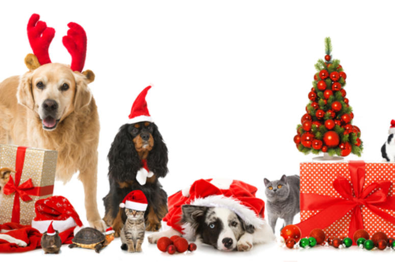 Merry Christmas Puppies.Pets Wish You A Merry Christmas Us 101