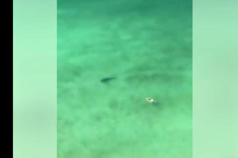 Incredible video shows shark circling swimmer in Panama City