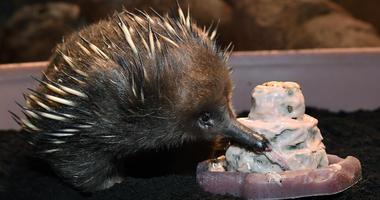 Adelaide, Brookfield Zoos oldest animal, turns 50