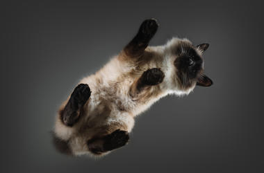 Cat on a Glass Table