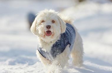 Happy Snowy Dog