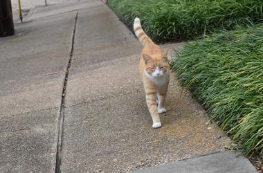 cat walking on sidewalk