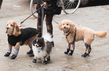 Now Your Dog Can Wear Leggings Just Like You