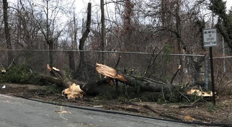Tree Down in Greenburgh