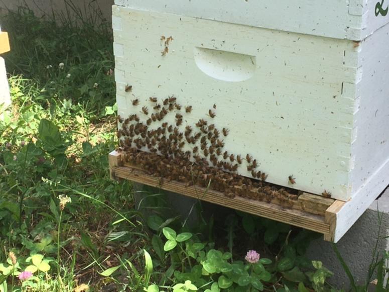 Mamaroneck High School Beekeeping