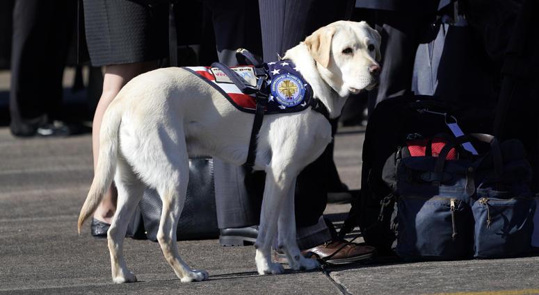 George H.W. Bush Service Dog
