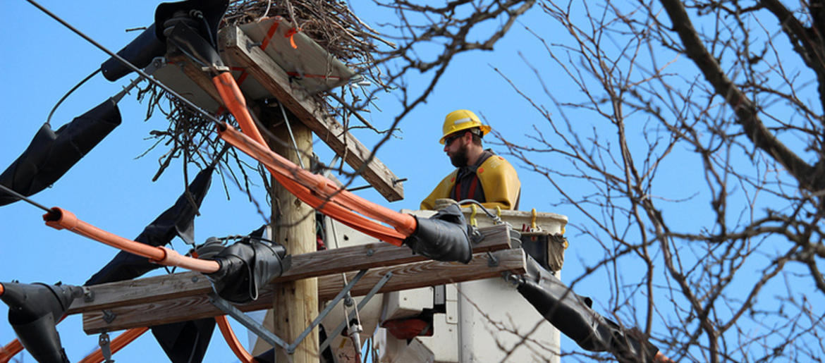 PSEG Long Island Crew Moves Osprey Nest Away From Electrical Wires