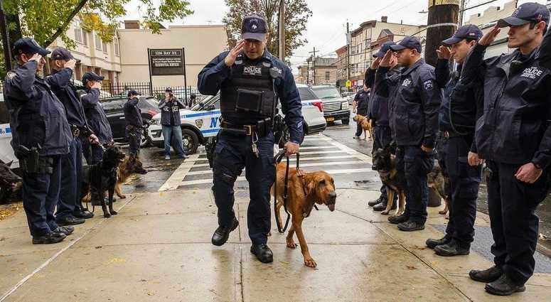 K-9 Angel NYPD
