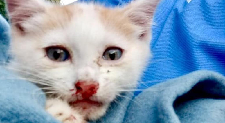 Kittens Thrown From Car