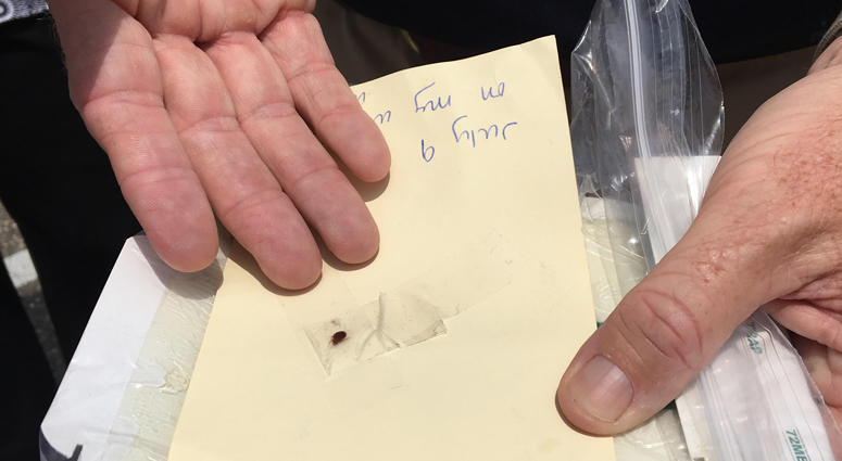 Bed bug in Town of Hempstead building
