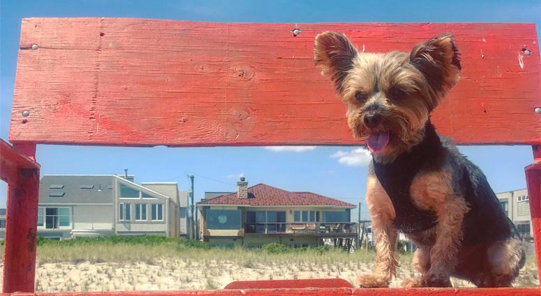 Chloe The Dog