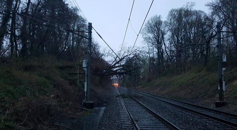 NJ Transit downed tree